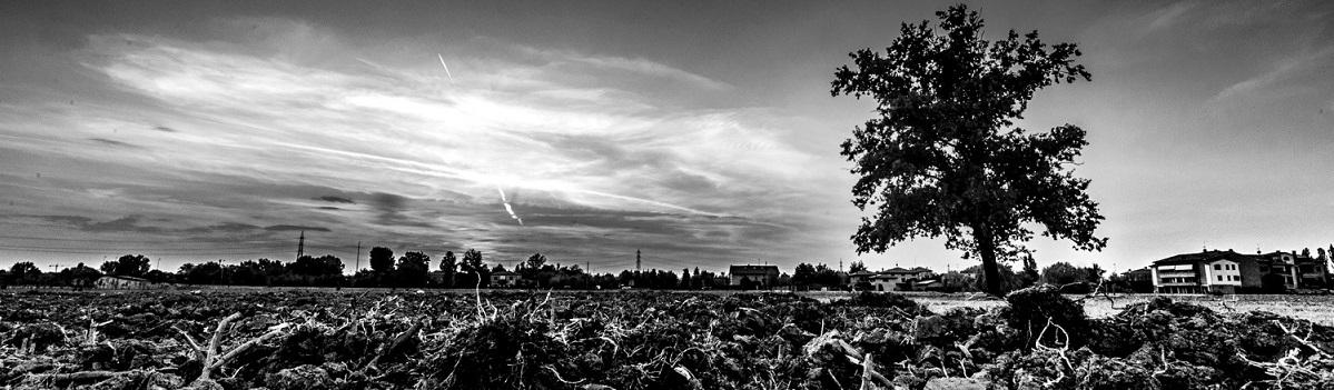 La Città Vegetale